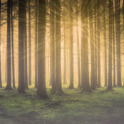 Fantasy: Útěk do lesa